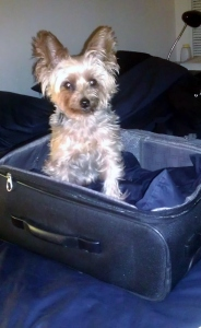 travelling with a dog