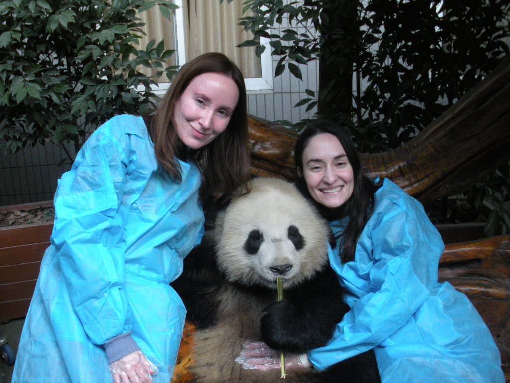 travel bucket list completed Hugging Baby Panda China