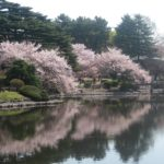 The Best Time to Visit Tokyo – A Trip Planning Guide